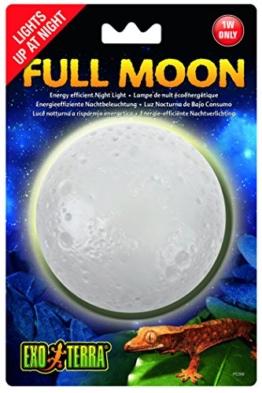 Exo Terra Mondlicht - 1